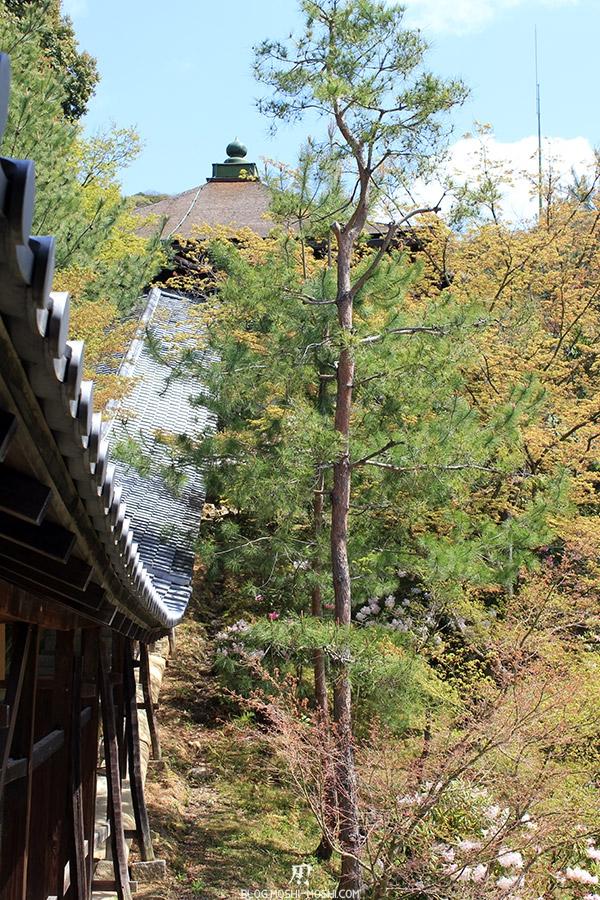 temple-kodai-ji-kyoto-saison-sakura-tunnel-vue-cote
