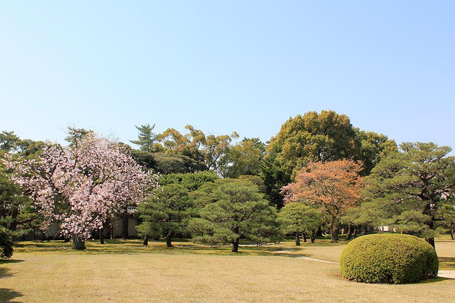 nijo-jo-chateau-kyoto-saison-sakura-jardins-cerisier-verdure