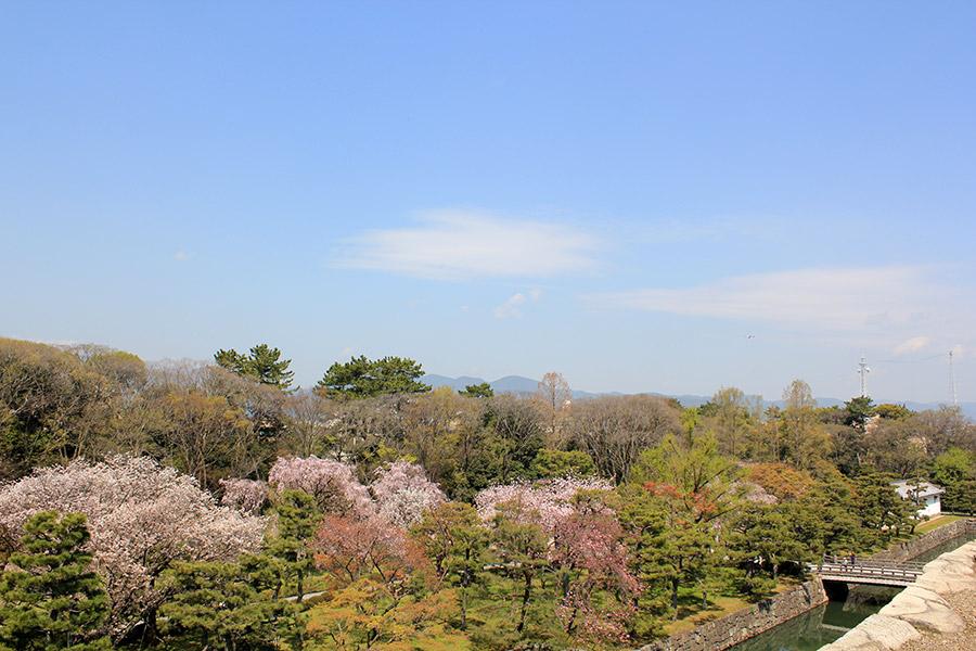 nijo-jo-chateau-kyoto-saison-sakura-rives-vue-hateur-muraille-cerisier