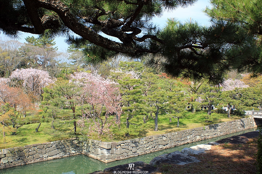 nijo-jo-chateau-kyoto-saison-sakura-vue-rives-cerisiers-japonais