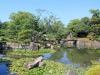 nijo-jo-kyoto-jardin-etang-nenuphares