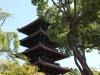 ninna-ji-kyoto-pagode-derriere-arbre