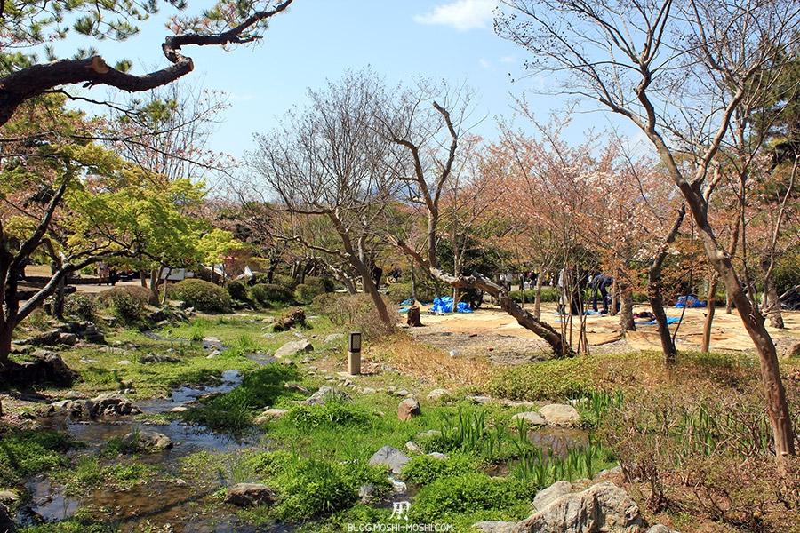 parc Maruyama kyoto-saison-sakura-riviere-verdure-cerisiers-fleurs-tombees