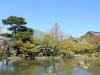 parc-maruyama-kyoto-saison-sakura-etang-petales-cerisiers