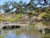 parc-maruyama-kyoto-saison-sakura-etang-pond-pierre-arrondi