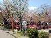 parc-maruyama-kyoto-saison-sakura-tables-assises-japonaise-hanami