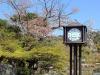 parc-maruyama-kyoto-saison-sakura-vieille-horloge