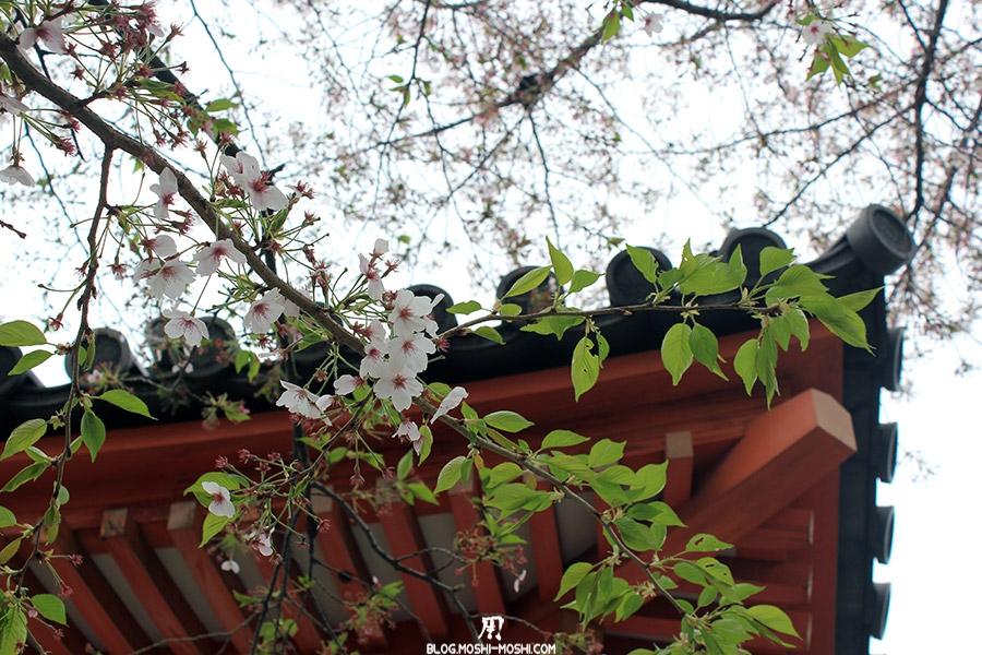 temple-sanjusangendo-kyoto-saison-sakura-fleurs-cerisier-gros-plan