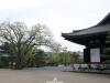 temple-sanjusangendo-kyoto-saison-sakura-cours-vue-jardins