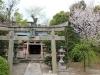 temple-sanjusangendo-kyoto-saison-sakura-petit-sanctuaire