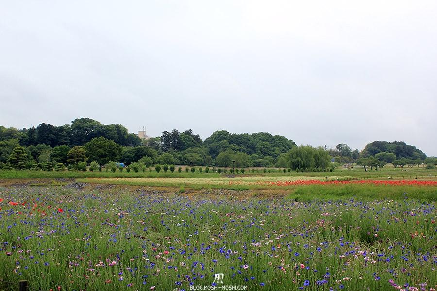 jardin-japonais-kairaku-en-cote-champs-fleurs-diversite-couleurs