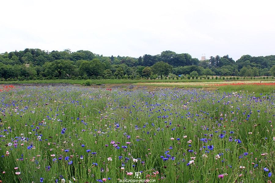 jardin-japonais-kairaku-en-cote-champs-fleurs-immense-champs-bleuet