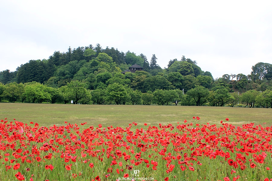 jardin-japonais-kairaku-en-cote-champs-fleurs-rouge-chalet