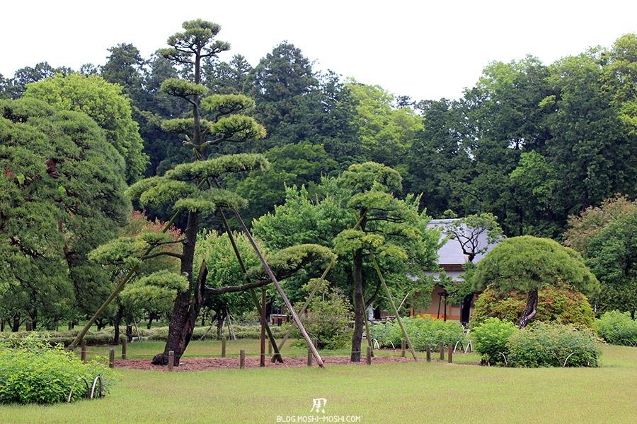 jardin-japonais-kairaku-en-hauteurs-pin-yukitsuri