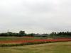 jardin-japonais-kairaku-en-cote-champs-fleurs-tulipes-rouges