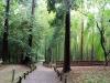 jardin-japonais-kairaku-en-entree-foret-bambou