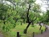 jardin-japonais-kairaku-en-entree-prunier