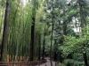 jardin-japonais-kairaku-en-melange-bambou-pins