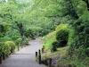 jardin-japonais-kairaku-en-sentier-arbuste-fleuri
