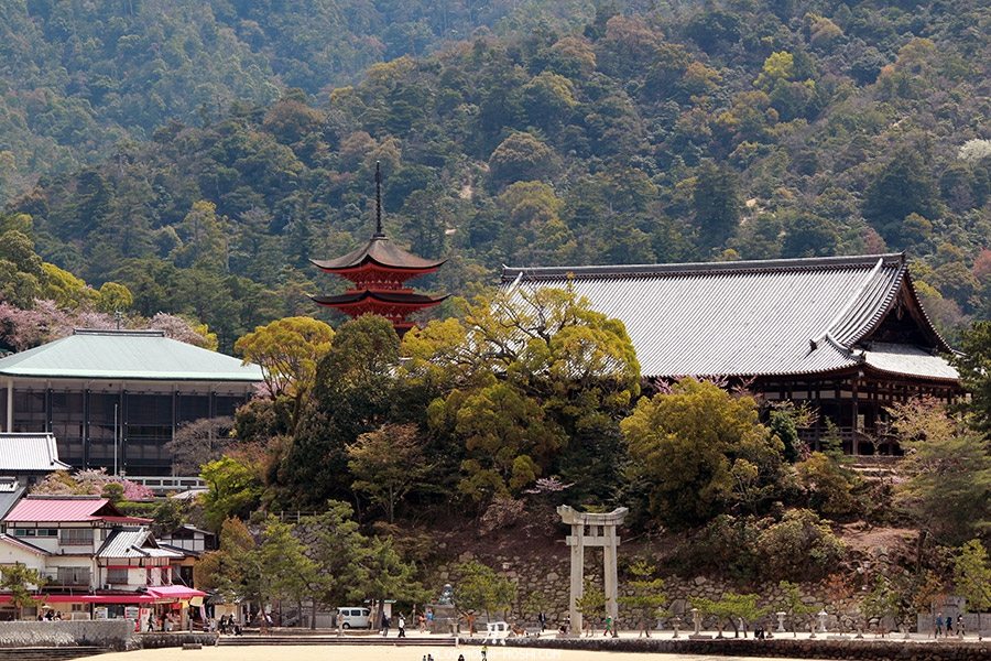 miyajima-hiroshima-saison-sakura-abords-plage-chemin-sanctuaire
