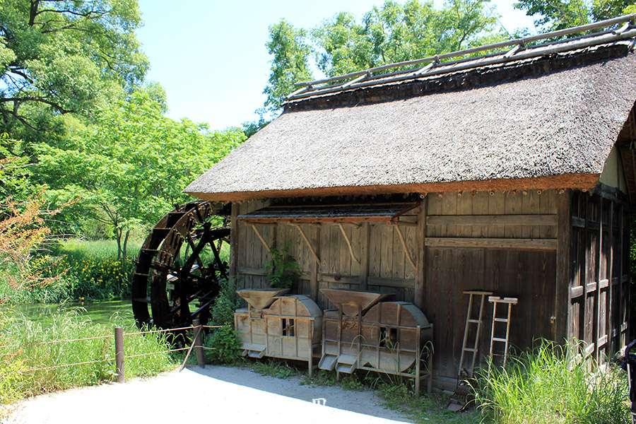 Nagano-plantation-wasabi-ferme-Daio-Wasabi-moulin-grains