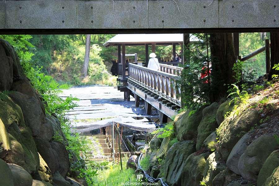 Nagano-plantation-wasabi-ferme-Wasabi-vue-derobee