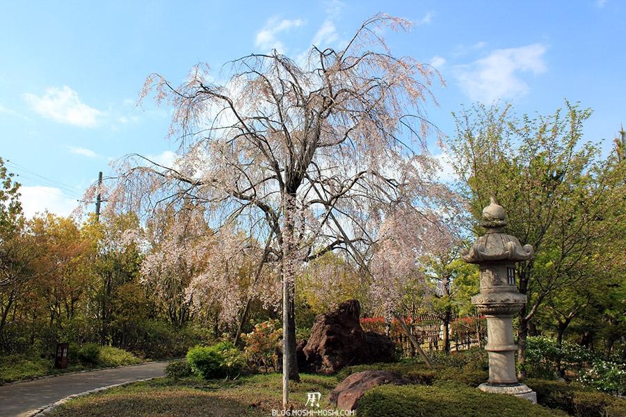 tokugawaen-parc-nagoya-cerisier-lanterne-japonaise