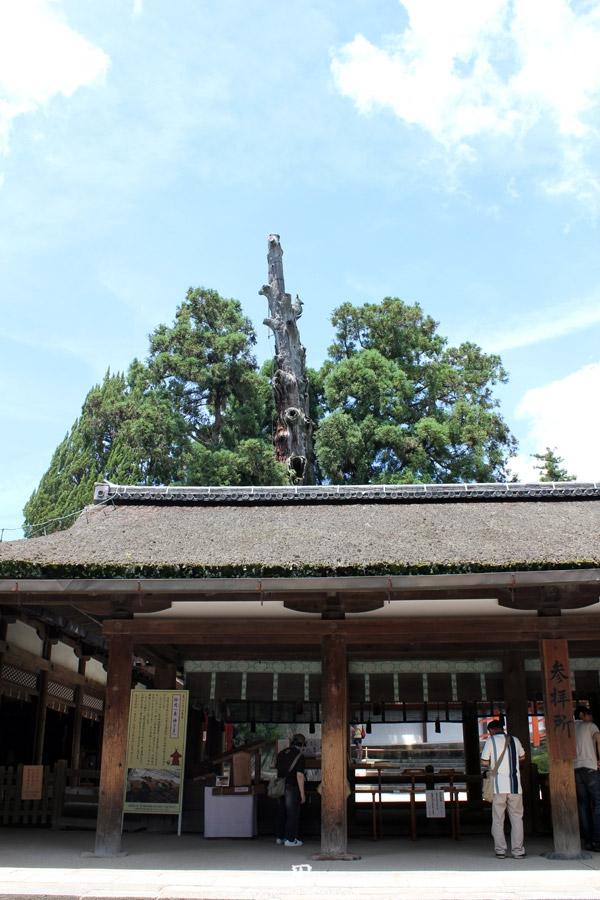 kasuga-taisha-Nara-arbre-ancien-geant
