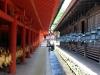 kasuga-taisha-Nara-entre-batiments