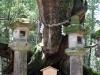 kasuga-taisha-Nara-plus-grand-arbre-prefecture