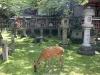 nigatsu-do-Nara-daim-dejeune
