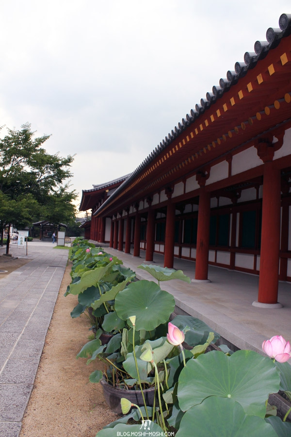 yakushi-ji-Nara-allee-lotus
