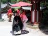 nikko-shunki-reitaisai-matsuri-grand-festival-de-printemps-grand-chef