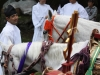 nikko-shunki-reitaisai-matsuri-grand-festival-de-printemps-jeune-fille-yukata-heureuse-regard-attendri
