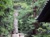 Nikko-tosho-gu-arbre-sacre