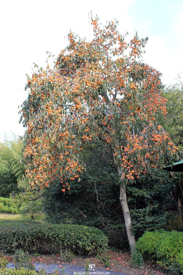 okayama-jardin-koraku-en-saison-momiji-kaki
