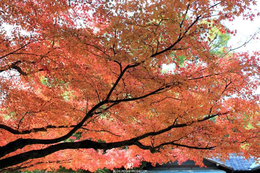 okayama-jardin-koraku-en-saison-momiji-large-etendue-momiji