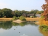 okayama-jardin-koraku-en-saison-momiji-canards-tranquilles