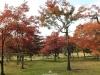 okayama-jardin-koraku-en-saison-momiji-coin-arbres-momiji-erable