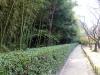 okayama-jardin-koraku-en-saison-momiji-coin-foret-bambou