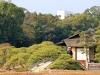 okayama-jardin-koraku-en-saison-momiji-pont-bois