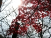 okayama-jardin-koraku-en-saison-momiji-rayon-soleil-reflet-momiji