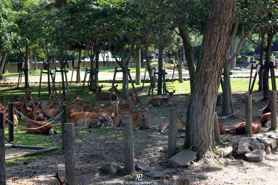 Parc aux daims de Nara