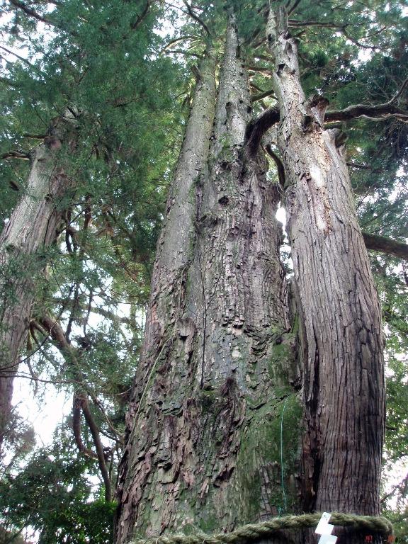 shrine-shirayama-hime-arbre-porte-bonheur