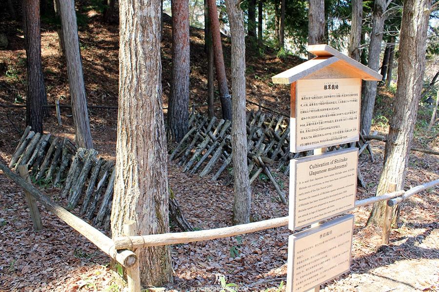 hida-no-sato-village-folklorique-musee-takayama-gifu-cultivation-shitake