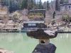 hida-no-sato-village-folklorique-musee-takayama-gifu-lanterne-rocher