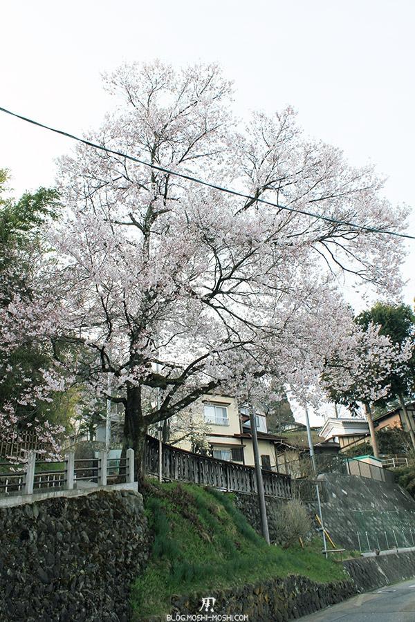 takayama-vieux-quartier-tot-le-matin-beau-sakura-fleuri