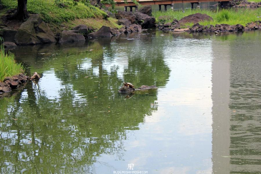 parc-kyu-shiba-rikyu-Tokyo-bronzette-tortue