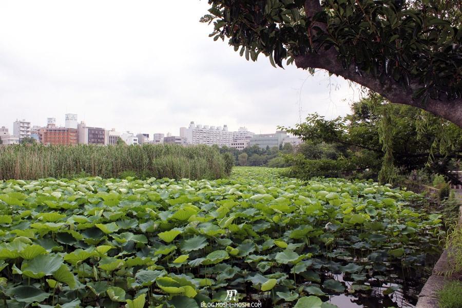 parc-ueno-Tokyo-etang-shinobazu-nenuphar-eau-arbre