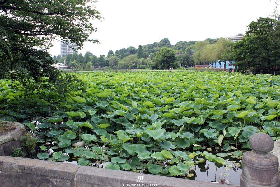 parc-ueno-Tokyo-etang-shinobazu-nenuphar